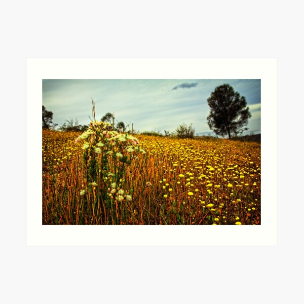 Feather Flowers on The Echidna Trail Art Print