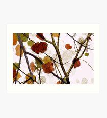 Fall Colors #3 Art Print
