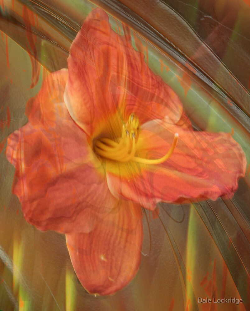Hermerocallis by Dale Lockridge