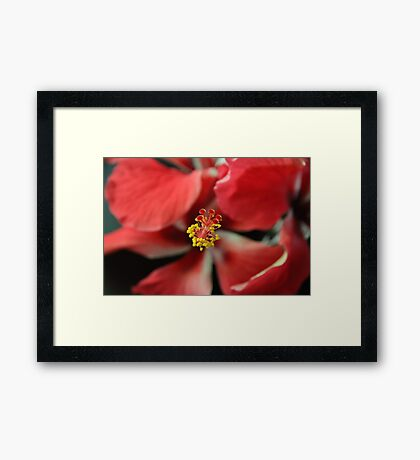 Stamen of the Hibiscus Flower Framed Print