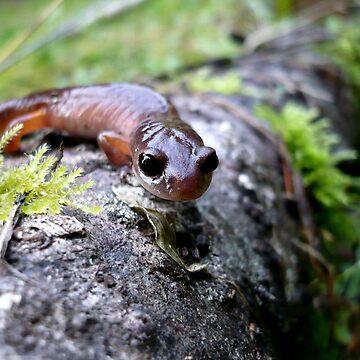 Oregon Ensatina Salamander by GlockGirl40