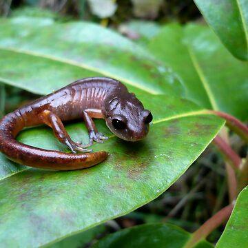 Oregon Ensatina Salamander 2 by GlockGirl40