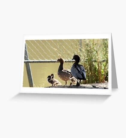 Wood duck family outing Greeting Card