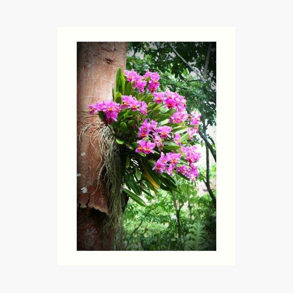 Tree Orchids Art Print