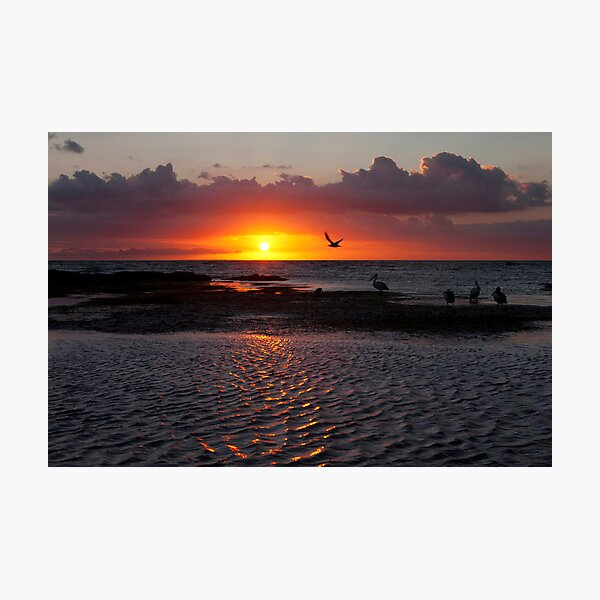 Sunset at Ricketts Point  Photographic Print