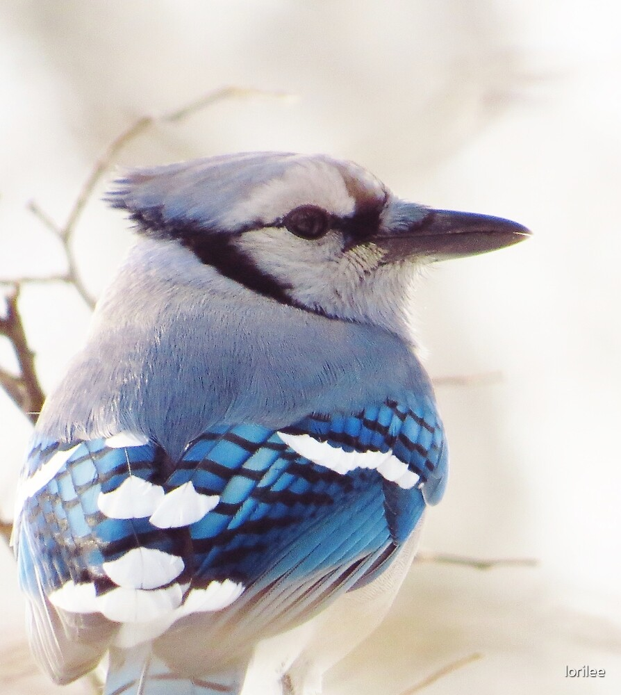 Blue on a Gray Day by lorilee