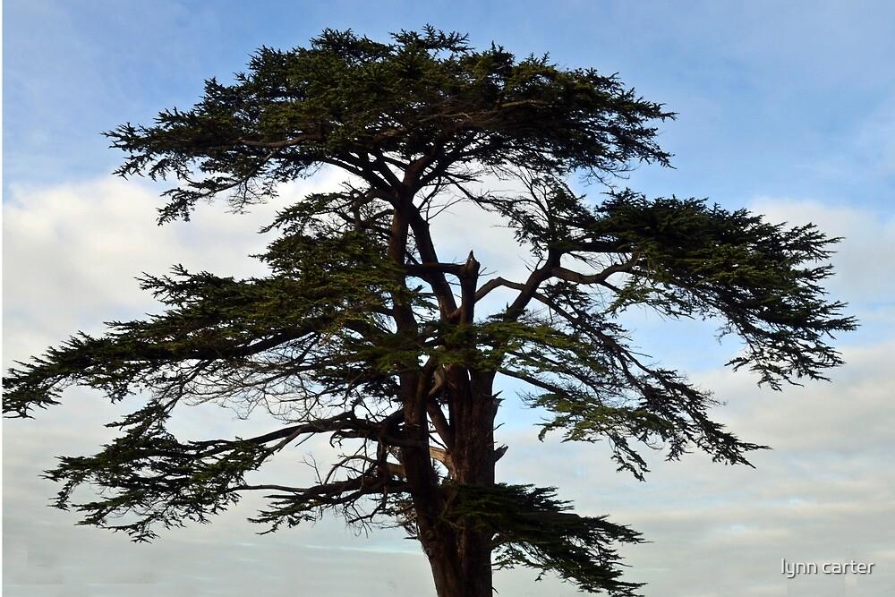 Shapely Tree by lynn carter
