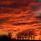 Help! The sky is on fire!  by Rob Schoon