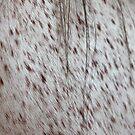 Freckles by Leslie Guinan