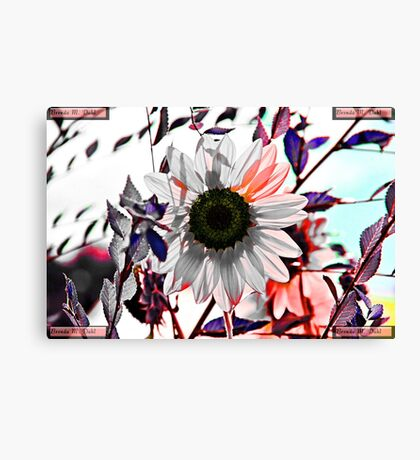 Autumn Cold Brings Bright Remembrance of the Warmth Canvas Print
