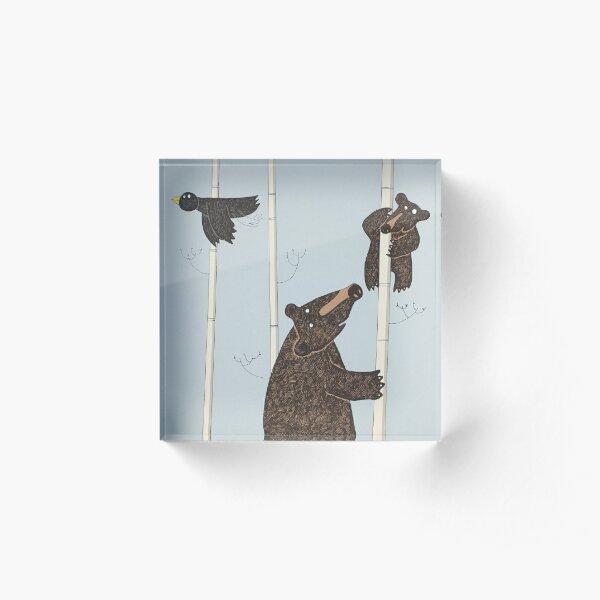 Mother & Baby Black Bear Up A Silver Birch Tree Acrylic Block