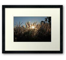 Grassy Sunset Framed Print