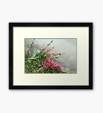 Grevillea in the rain Framed Print