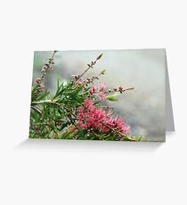 Grevillea in the rain Greeting Card