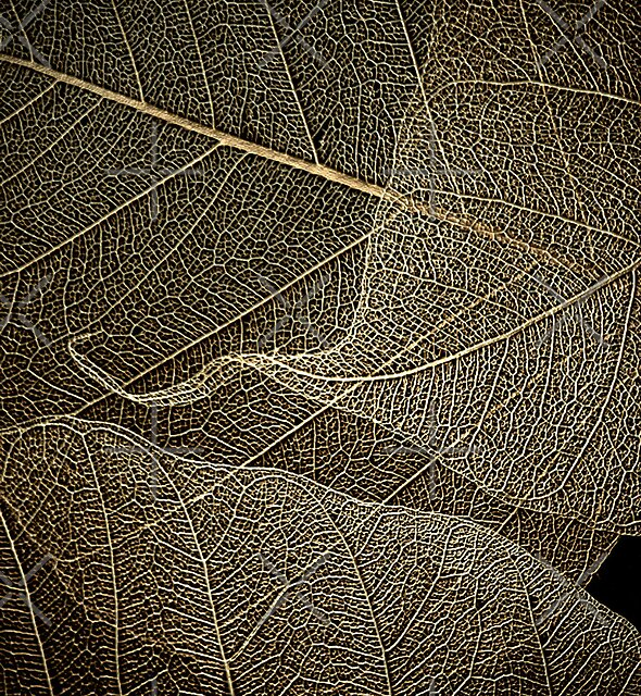 Lace by EbyArts