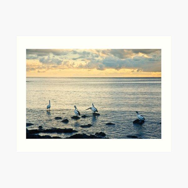 Pelicans at Black Beach - Kiama Art Print