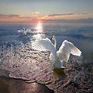 Swan Sunset by Igor Zenin