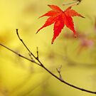 just one red momiji leaf by parisiansamurai