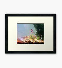 Daxter Framed Print