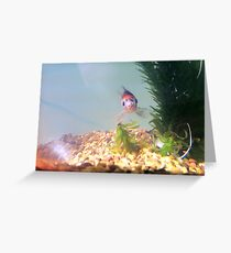 Daxter Greeting Card