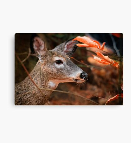 Whitetail in the Woods Canvas Print