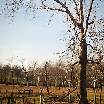 farm fields, clarke county, virginia by grchrdanderson