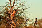 Getting airborne by Explorations Africa Dan MacKenzie