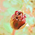 A Rose Bud by Vitta