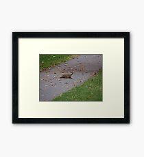 Silly Ol Groundhog Framed Print