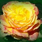 Golden Beauty by Paula Tohline  Calhoun
