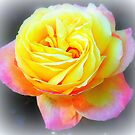 Yellow Rose With Love by Paula Tohline  Calhoun