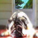 Love Pug by ladywings