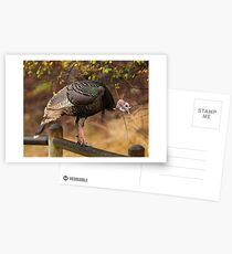 Happy Thanksgiving! Postcards