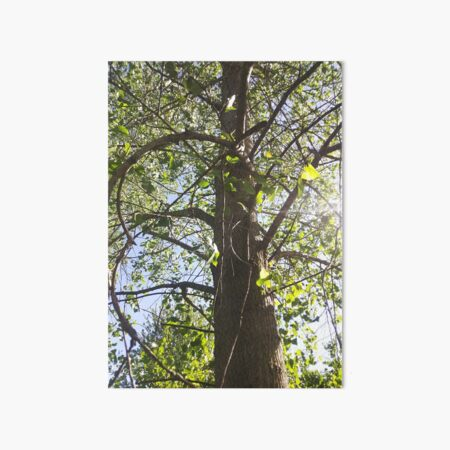 Curving Branches, Perspective Nature Photography by Courtney Hatcher Art Board Print