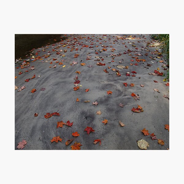 Leaves on a sand bar Photographic Print