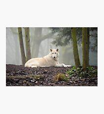 Lámina fotográfica Lobo solitario