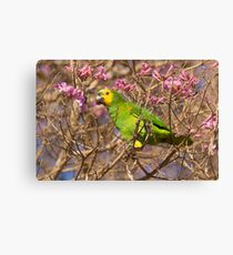Blue-fronted Parrot, Brazil Canvas Print