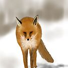 Red Fox - drawn on the iPad - Phone Case by Ray Cassel