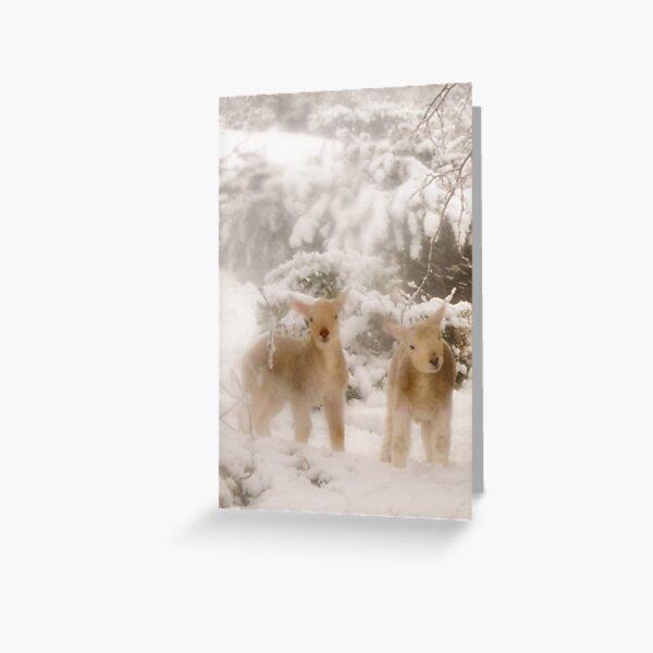 Lambs in Snow Greeting Card