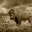 Sepia Toned American Buffalo or Bison by Randall Nyhof