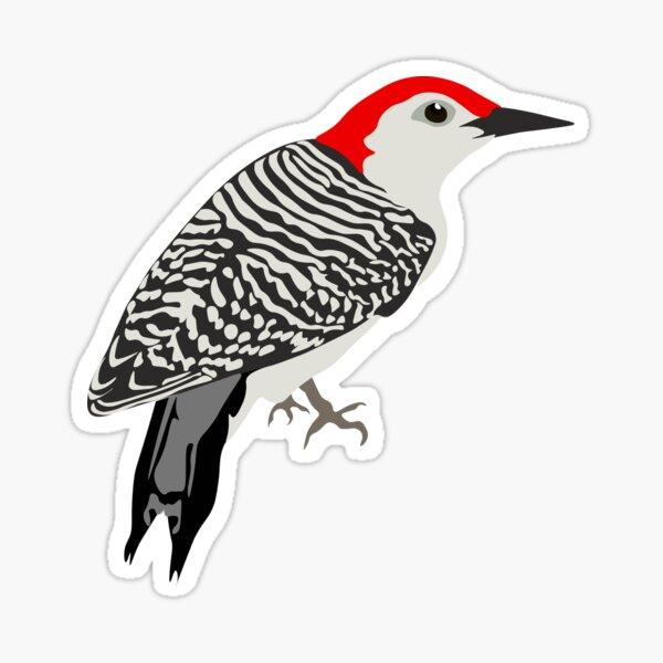 Red Bellied Woodpecker Sticker Sticker