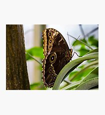 Butterfly on Perch Photographic Print