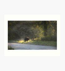 Black Bear Morning Art Print
