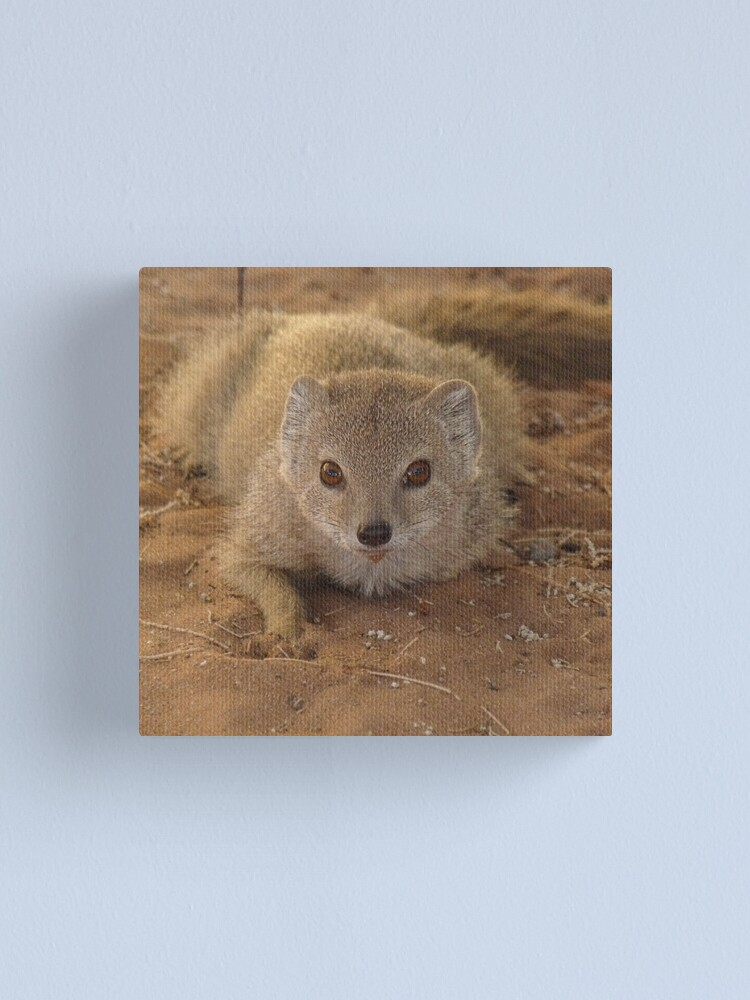 Alternate view of A study in mongoose Canvas Print