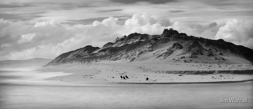 Life on the Dunes - Powlett River by Jim Worrall