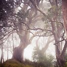 Bunya Mist by JoHammond