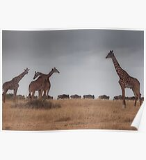 The great migration Poster