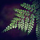 Bunya Fern  by JoHammond