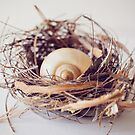 Still Life ~ Nest by JoHammond