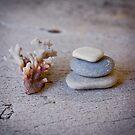 Still Life ~ Seaside treasures by JoHammond